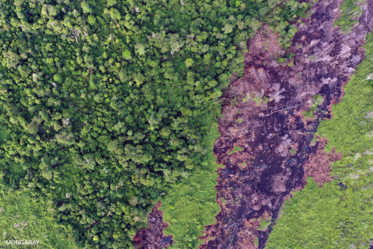 Drained, cleared, and burnt peat timberland in Indonesian Borneo. Photo by Rhett A. Butler