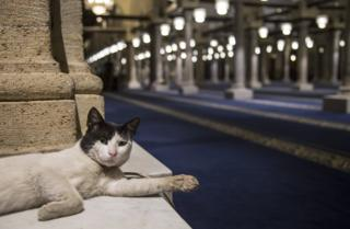 A cat stretches out one duke as it lays down in a mosque.