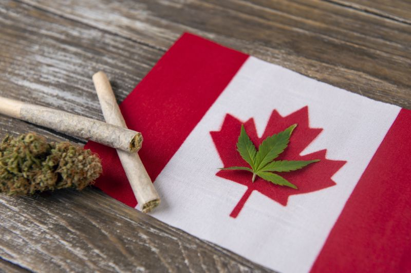 A cannabis root laid within a Canadian flag's red maple leaf, with rolled joints and a cannabis blossom to a left of a flag.