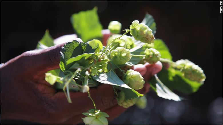 south africa hops