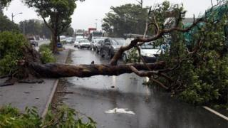 Traffic jams caused by depressed trees during a charge in Durban, South Africa Oct 10, 2017