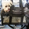 How to safely transport with pets