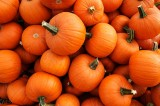 In conflict of pumpkin piquancy vs. apple, one tumble season has a edge