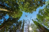 Travel App Hopper Pays $1M For Carbon Offsets; Aims To Be First Sustainable Booking Platform