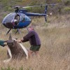 South Africa rhino deaths strike record notwithstanding charge push