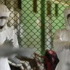 Ebola outbreak: MSF to start West Africa clinical trials