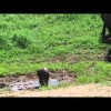 Curve a elephant gives birth to singular twins in South Africa